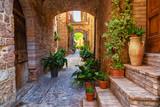 Fototapeta Uliczki - Plants in pots on narrow streets of the ancient city of Spello, Umbria, Italy