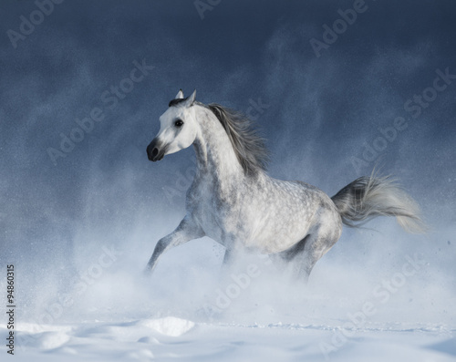 Foto op Canvas Paarden Purebred grey arabian horse galloping during a blizzard