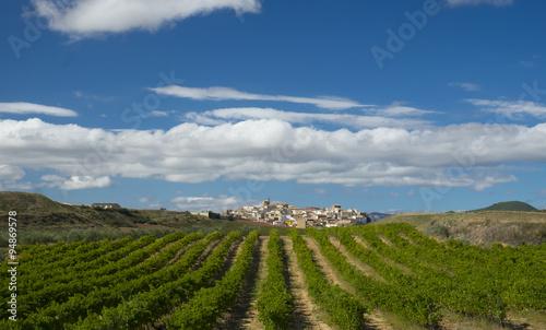 Vineyards, wine on the Way of St. James, Zirauki, Navarra