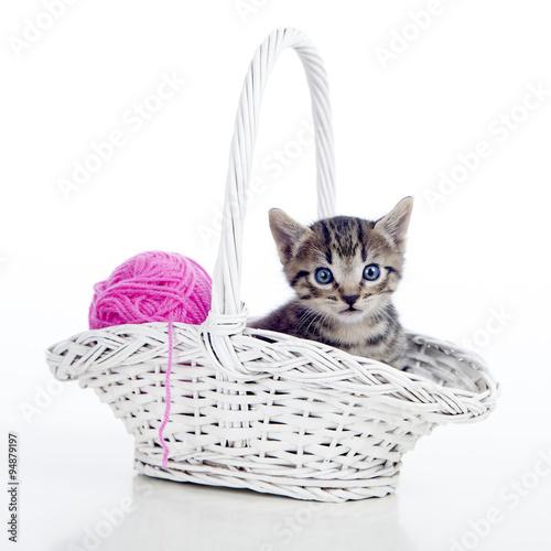 kotek-o-niebieskich-oczach-w-koszyku-z-kulka-welny
