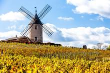 Vineyard With Windmill Near Chenas, Beaujolais, Rhone-Alpes, Fra