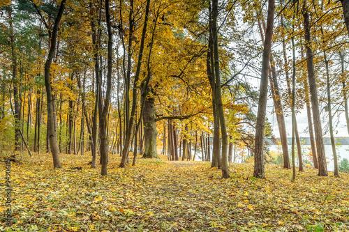 Papiers peints Foret brouillard yellow forest