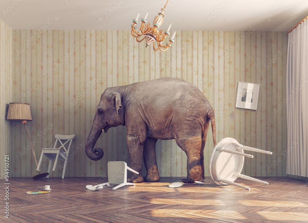 Fototapety, obrazy: a elephant in a room