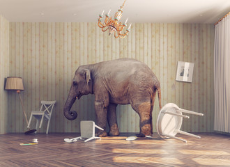Fototapetaa elephant in a room