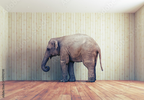 Photo sur Toile Elephant an elephant in the room