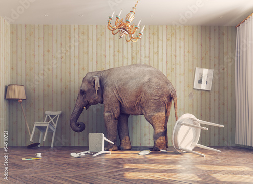 a elephant in a room Wallpaper Mural