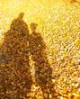 canvas print picture - Schatten im Laub
