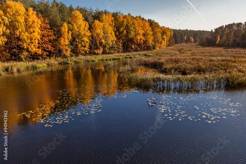 Papiers peints Vue aerienne autumn, Aerial view of autumn forest