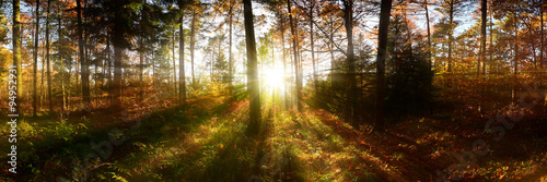Fotobehang Natuur Wald Panorama mit Sonnenstrahlen