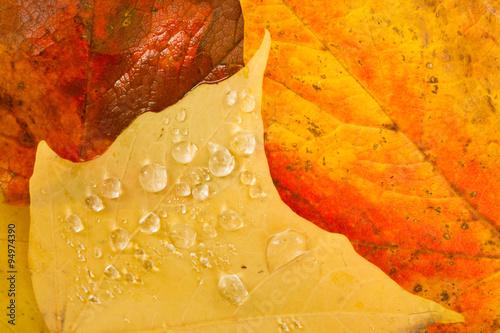Fotografie, Obraz  Leaves Fallen Winter Nature Ground Autumn Season Change Dew Drop