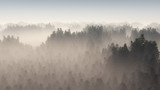 Dense pine forest in morning mist. - 94993758