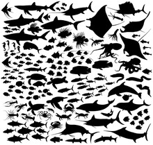 Saltwater Fishes Vector Silhou...