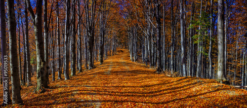 Spoed Foto op Canvas Zwart Colorful autumn trees