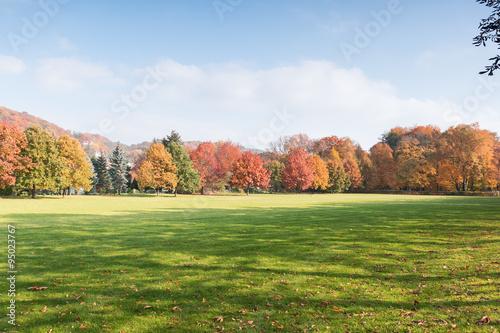 Spoed Foto op Canvas Blauwe hemel Wald, Herbstwald mit bunten Bäumen
