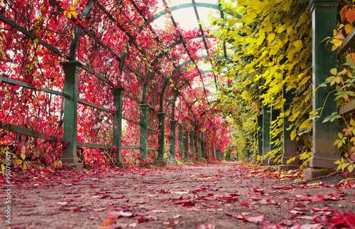 Autumn archway in the garden. Fototapet