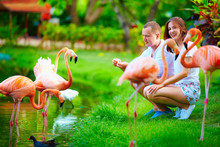 Young Couple Feeding Flamingo ...