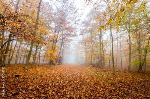 Aluminium Prints Autumn Herbstwald