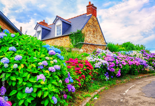 Colorful Hydrangeas flowers in a small village, Brittany, France Fotobehang