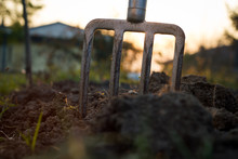 Pitchfork Stucks In The Clay During Sunset, Gardening Tools (fla