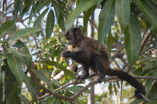 Cadres-photo bureau Singe Mono comiendo plátano
