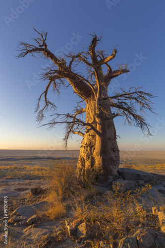 Lone Baobab Tree at Sunrise