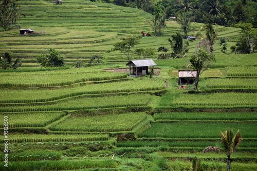 ASIA INDONESIA BALI LANDSCAPE RICEFIELD