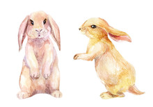 Watercolor Rabbit Illustration
