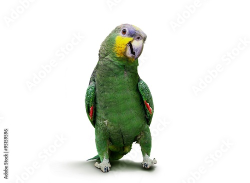 Poster de jardin Perroquets Parrot walking and dancing over white