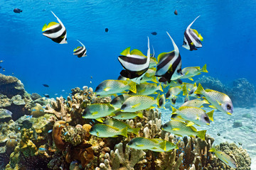 Fototapeta Shoal of fish on the coral reef