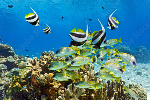 Shoal of fish on the coral reef - 95199537