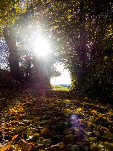 Foto op Canvas Tuin Herbstliches Laub