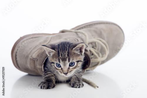Valokuva Gatito saliendo de bota tumbada