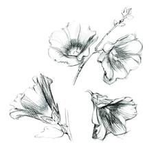Set Of Hollyhock Flowers. Hand Drawn Sketch By Ink.