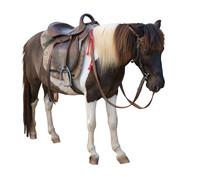 Mini Dwarf Horse/Mini Dwarf Ho...