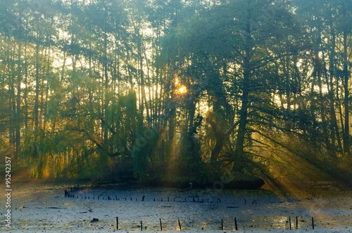 Autumn morning landscape. The sun's rays emerging from between the trees in the park.