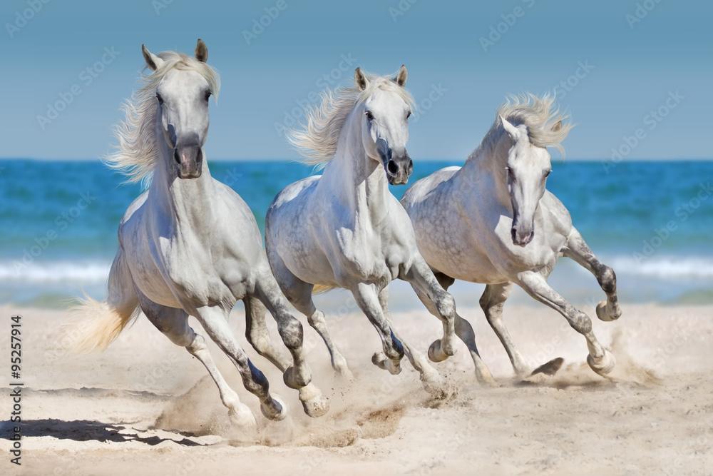 Fototapety, obrazy: Horses run along the coast
