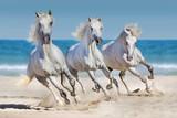 Konie biegną wzdłuż wybrzeża - 95257914