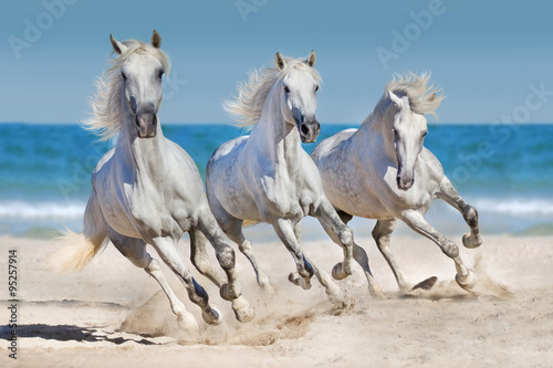 Foto op Plexiglas Blauwe jeans Horses run along the coast
