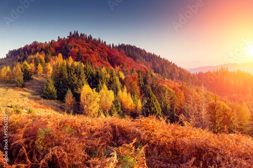 Deurstickers Oranje eclat beautiful autumn day