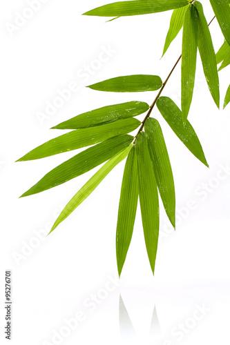 swieze-liscie-bambusa-z-kroplami-wody