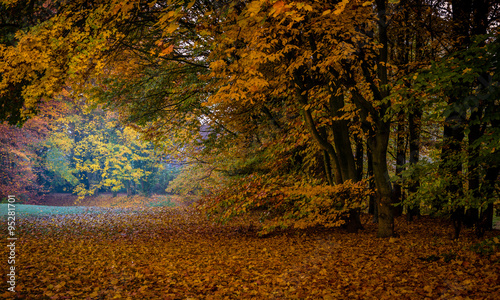 Deurstickers Herfst Beautiful Colorful Autumn Leaves / green, yellow, orange, red