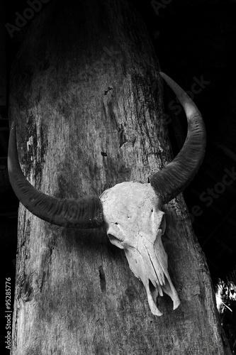 Printed kitchen splashbacks Watercolor Skull Buffalo on the old wood.