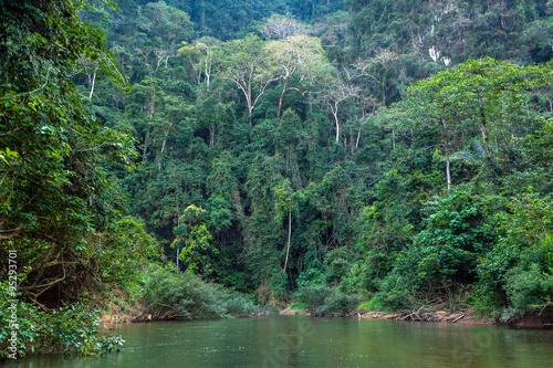 Fotografía  Tropical jungle