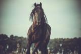 Fototapeta Room - horse