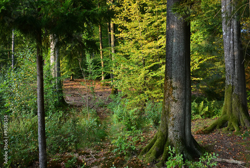 Foto op Plexiglas Noord Europa green forest in Europe