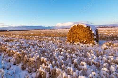 Fototapeta  сельское поле со скошенной травой и первым снегом, Россия, Урал