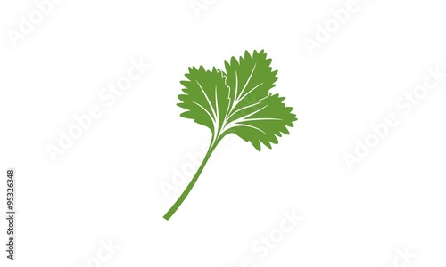 Fototapeta One result of agriculture as a cooking spice ingredient is coriander obraz