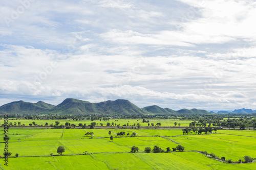 Fotobehang Rijstvelden green landscape