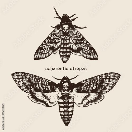 Photo Vector hand drawn Deaths head hawk moths illustration