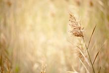 Marsh Grasses At Virginia Beach